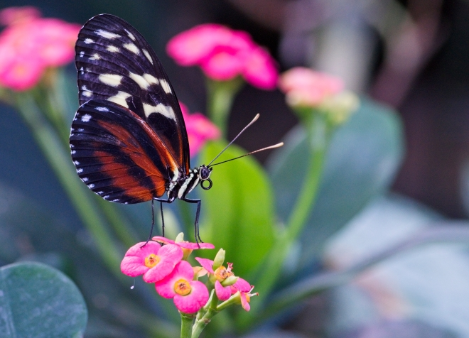 butterfly, nature, flowers, macro photography, butterflies, colourful, fine art, Garvin, Garvin Hunter, Artwork, Canadian Artist