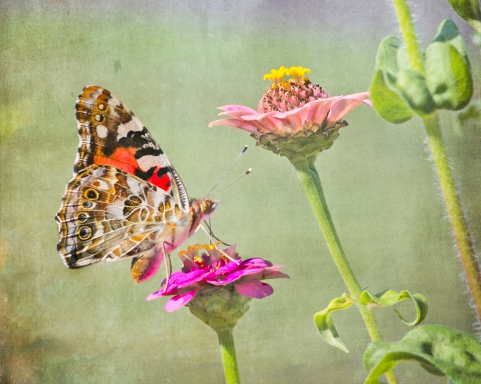 butterfly, nature, flowers, macro photography, butterflies, colourful, fine art, Garvin, Garvin Hunter, Artwork, Canadian Artist