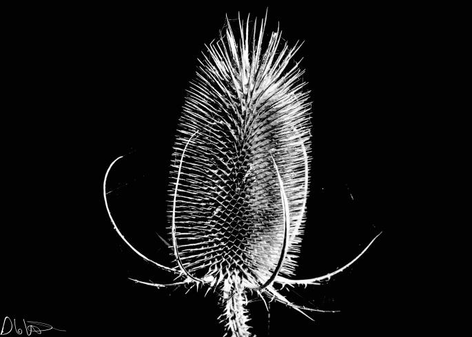 Black and white, B&W, plants, forest, macro photography, nature, contrast