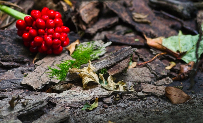 forest floor, berries, wild berries, texture, autumn, fall, nature, forest, colours, Canadian fall, Canadian colours, Canadian Art, Garvin Hunter Photography
