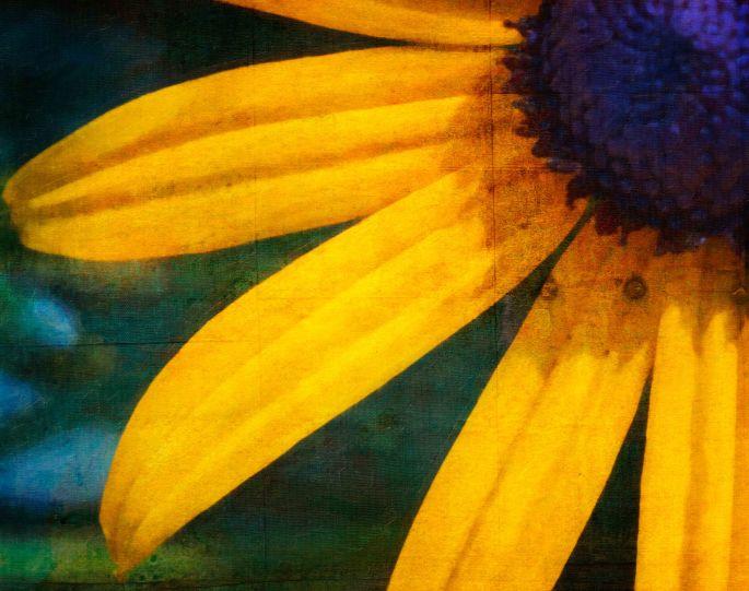 floral artwork, flowers, petals, floral photography, photography, flowers, botanical gardens, botanical prints, Garvin Hunter Photography